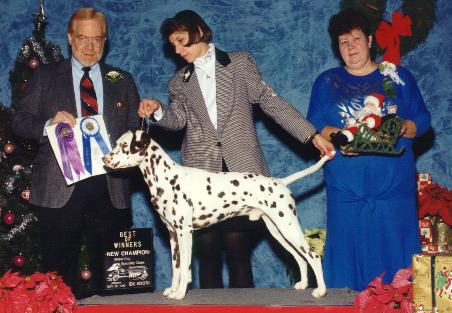 Best of Winners at the Dalmatian Club of Detroit Specialty